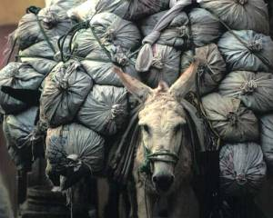 Burro-with-Bags